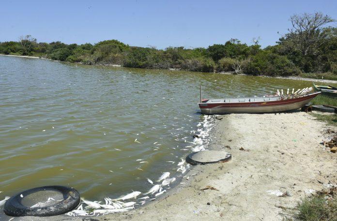 Peixes foram encontrados mortos na lagoa de São José do Imbassaí - Fotos: Clarildo Menezes/ Prefeitura de Maricá