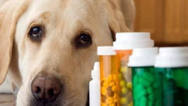 cachorro com remédios