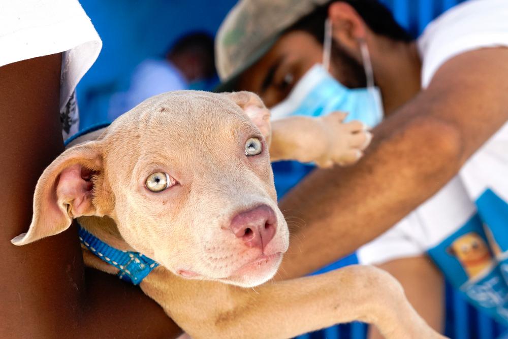 Imagem de um cachorro sendo vacinado