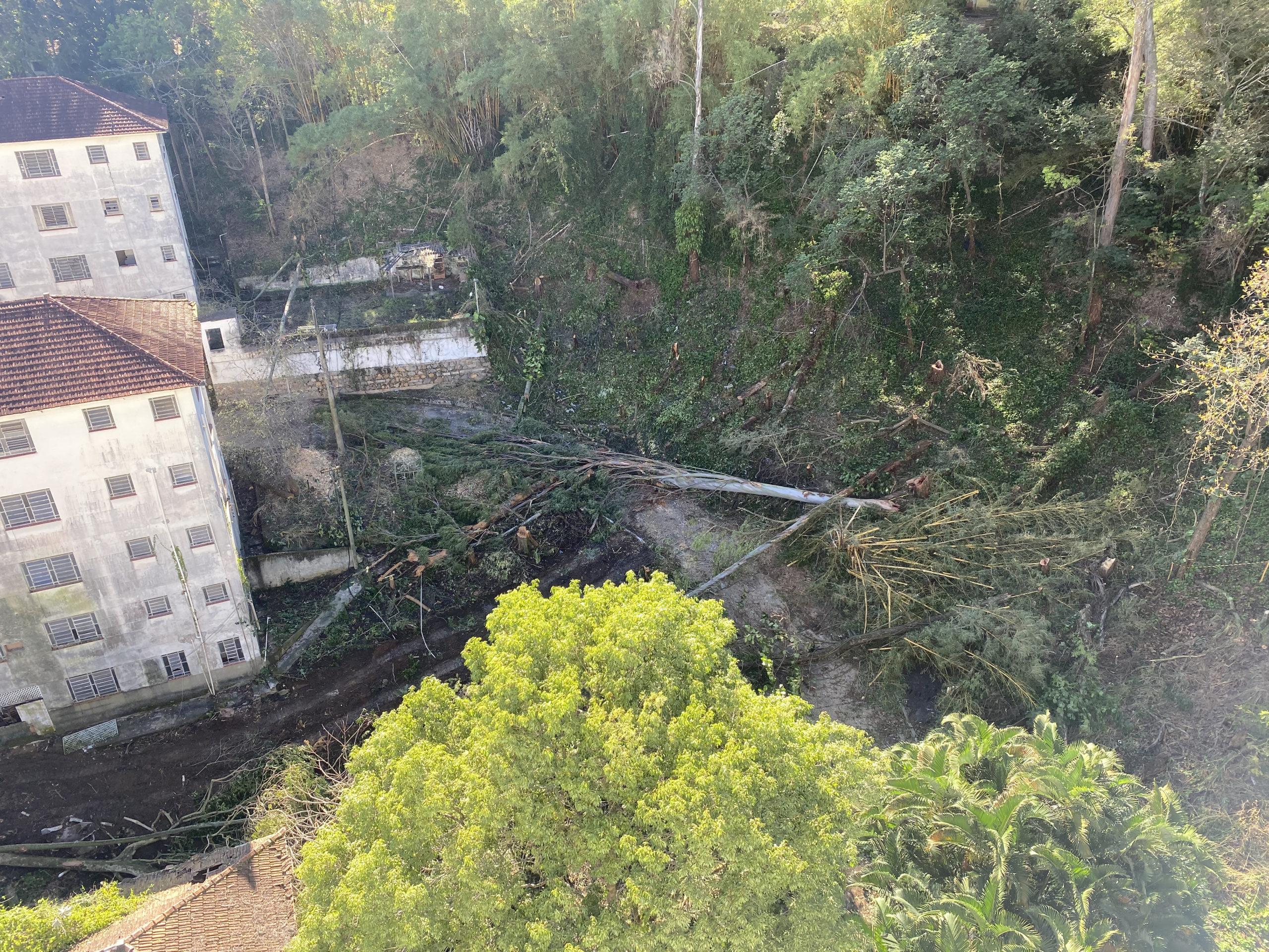 Árvores já foram derrubadas para construção de condomínio de luxo