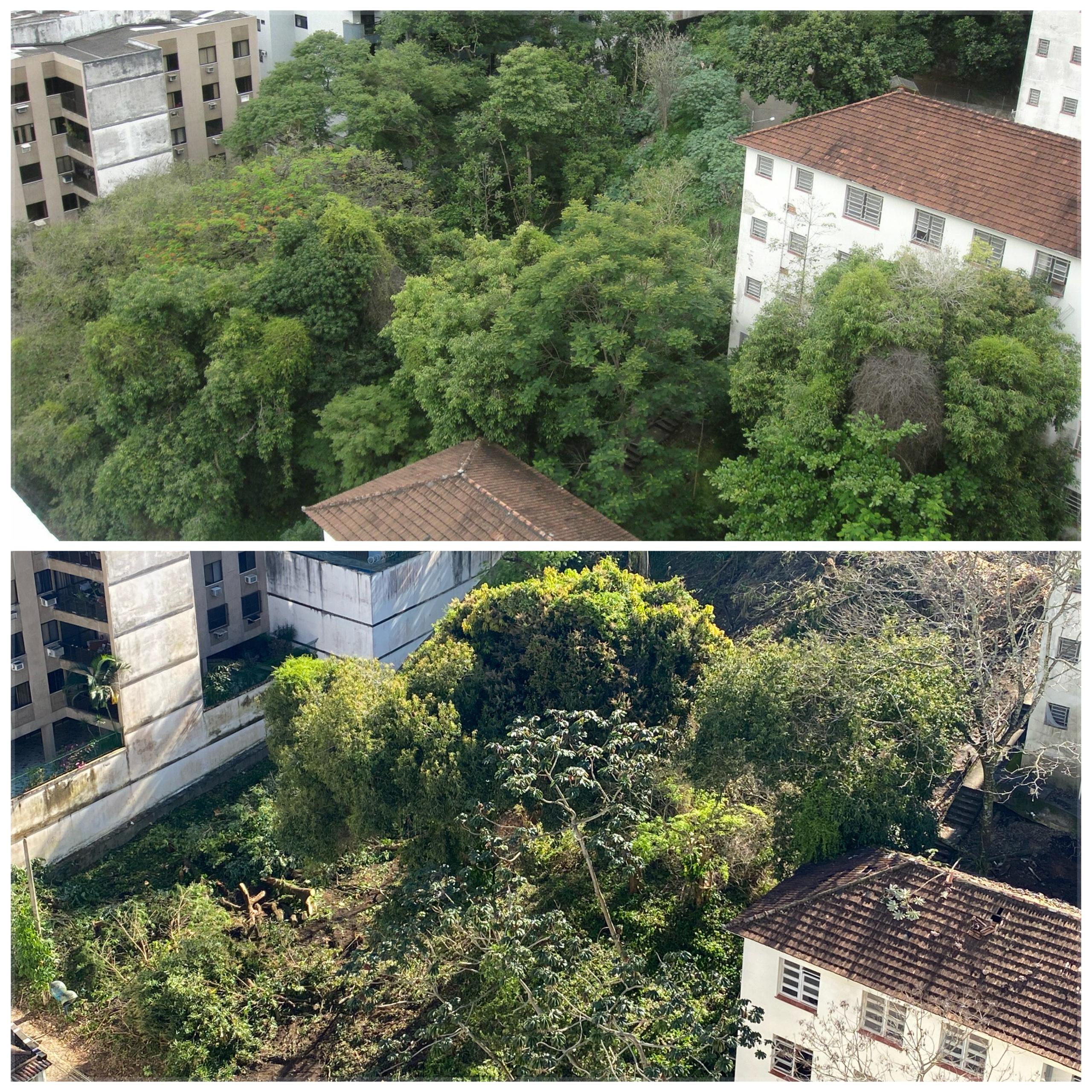 Veja antes e depois de área que será desmatada