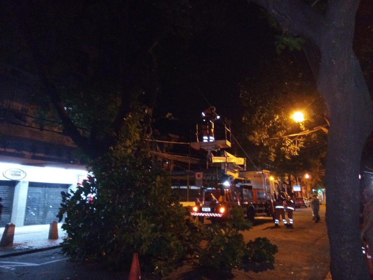 Árvore cai na Tijuca