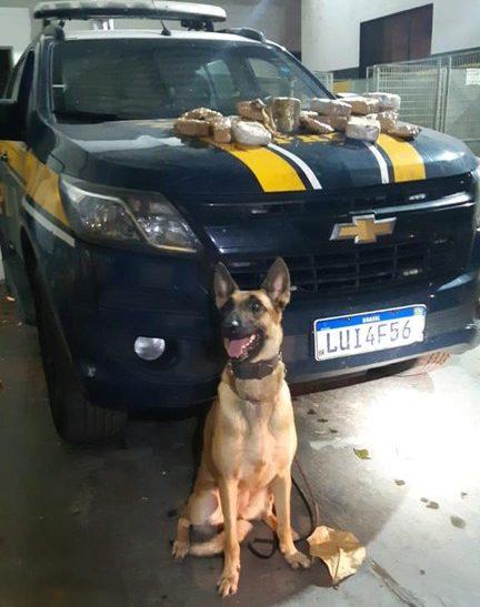 Cachorro da PRF com viatura ao fundo e drogas no capô