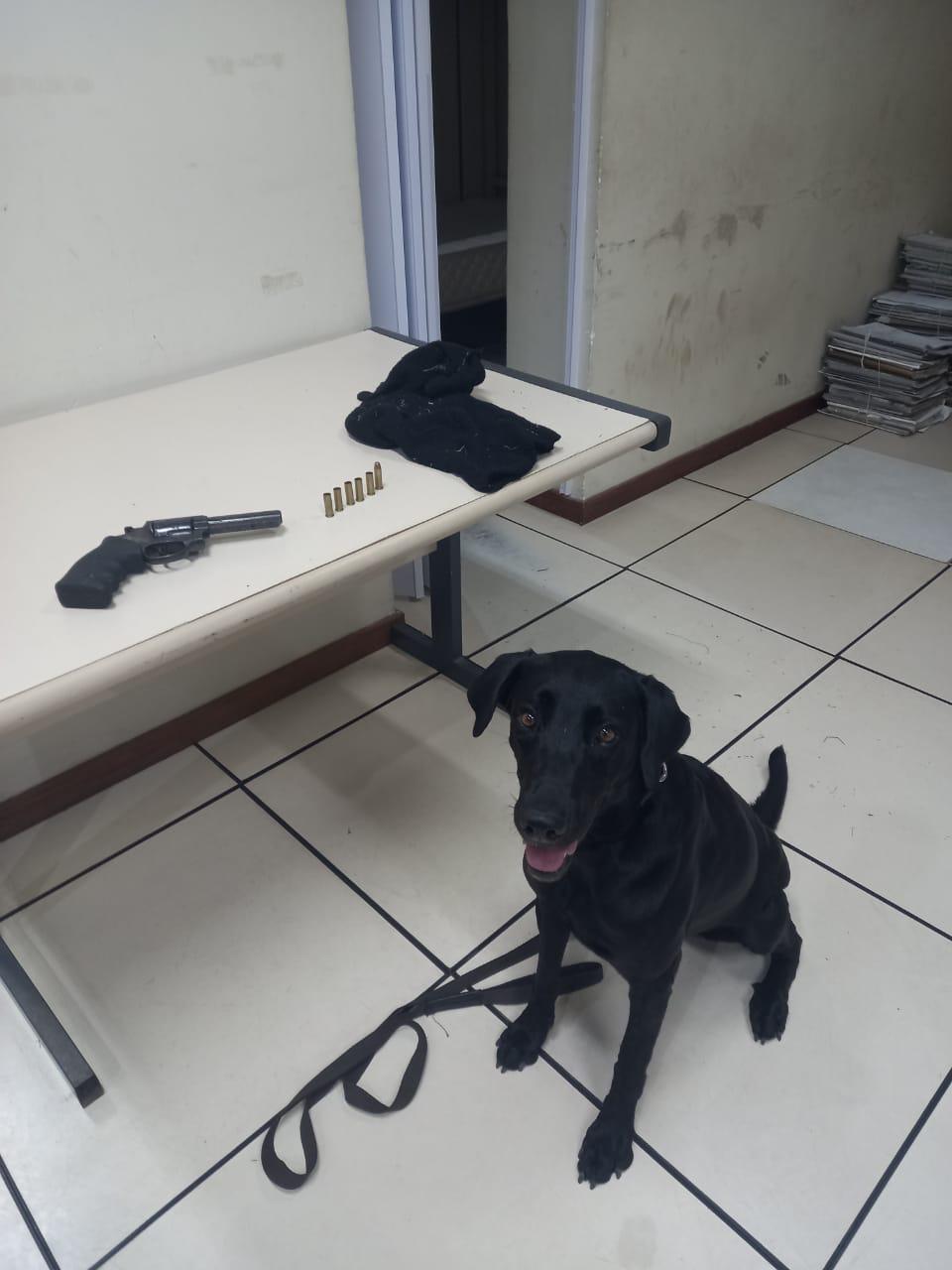 Imagem do cão farejador da CORE
