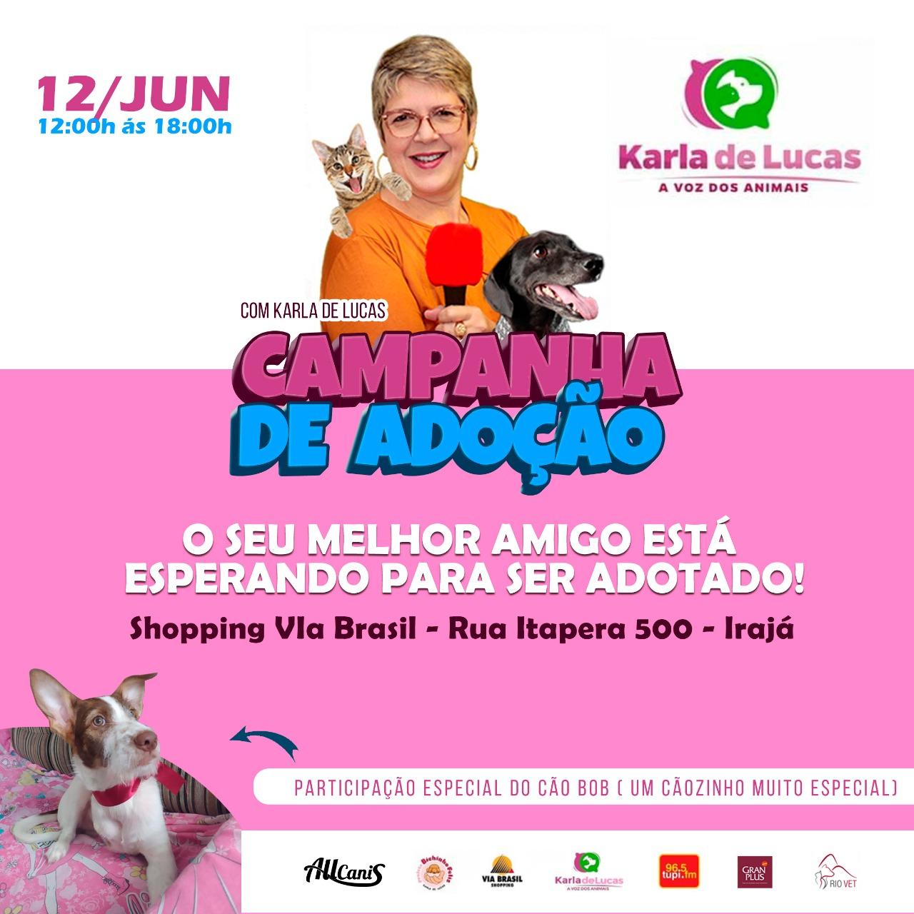 campanha adoção animais