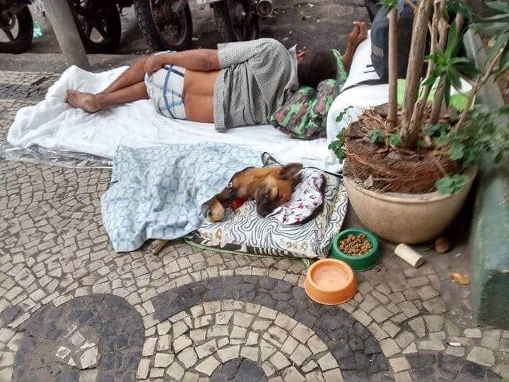 Câmara do Rio aprova lei que autoriza moradores de rua a entrar em abrigos com animais de estimação