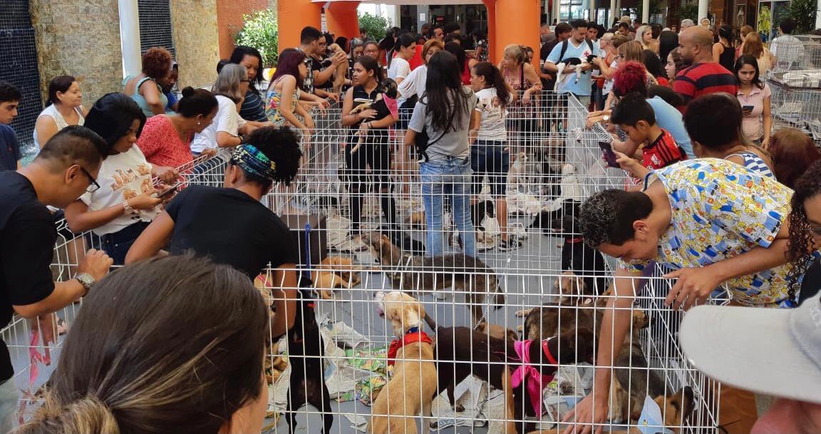 Imagem de uma feira de doação de animais