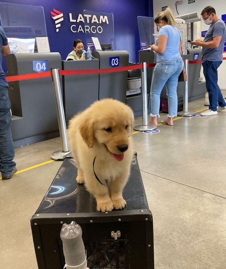 Cãozinho em cima de mala