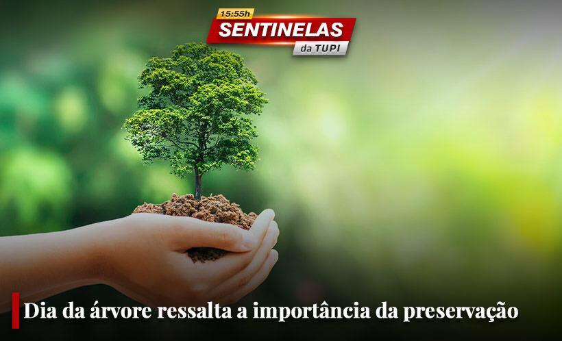 Dia da árvore ressalta a importância da preservação ambiental