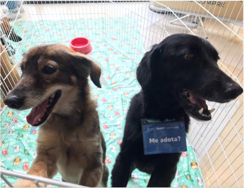 Imagem de cães para adoção