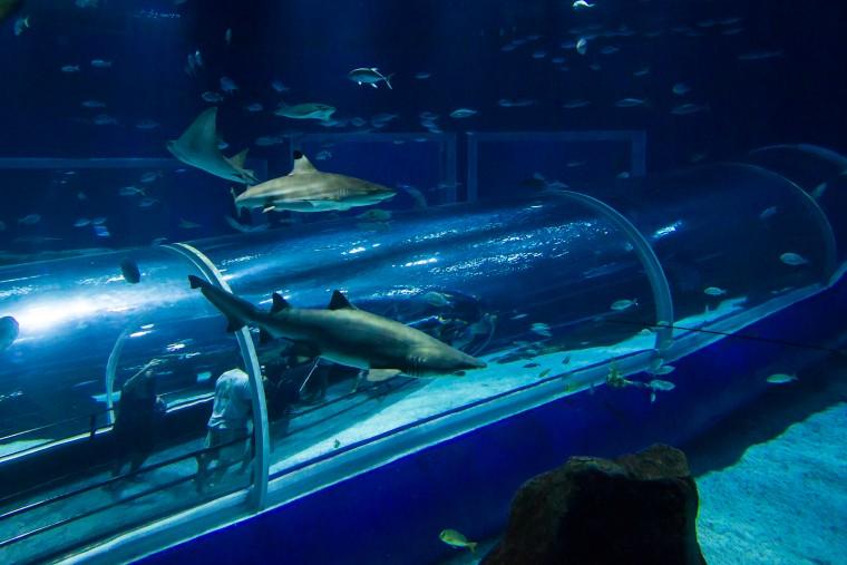 aquario marinho 123