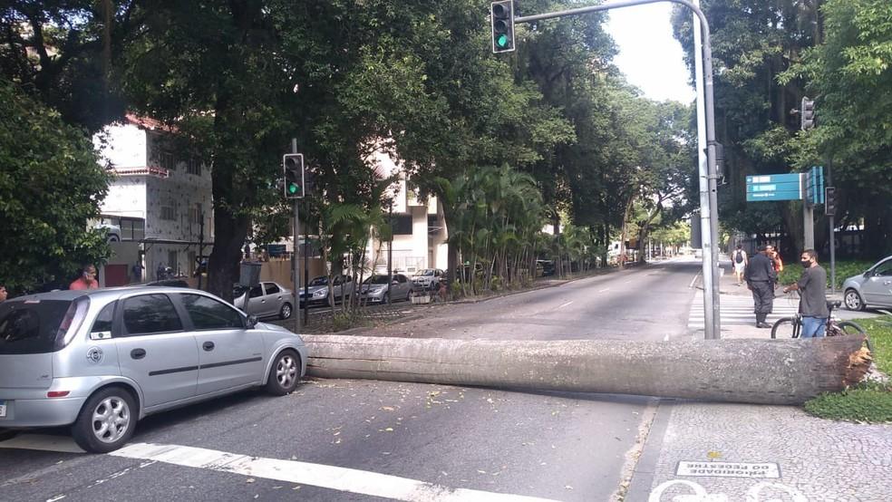 Árvore caiu na Rua Pinheiro Machado, em Laranjeiras, em frente ao Palácio Guanabara