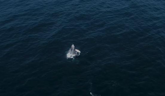 Baleia Jubarte, na Praia Grande, em Arraial do Cabo (Divulgação)