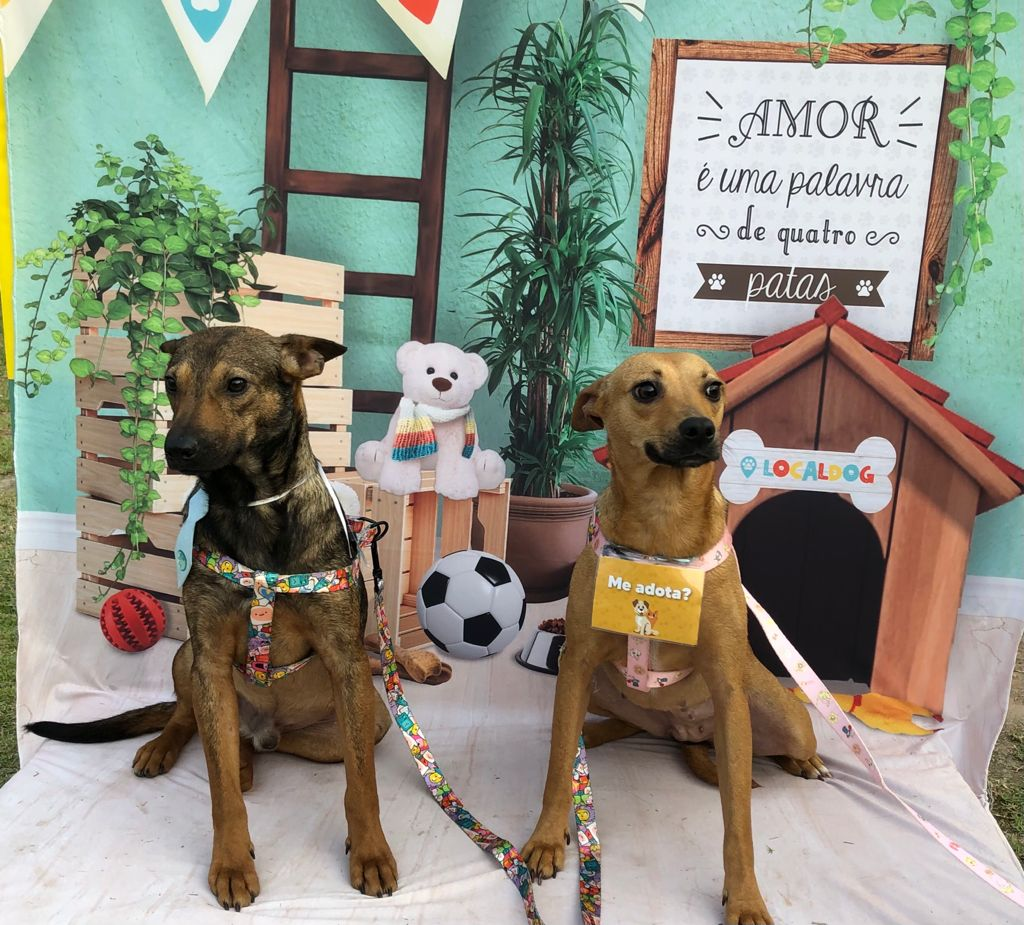 Imagem de cachorros para adoção