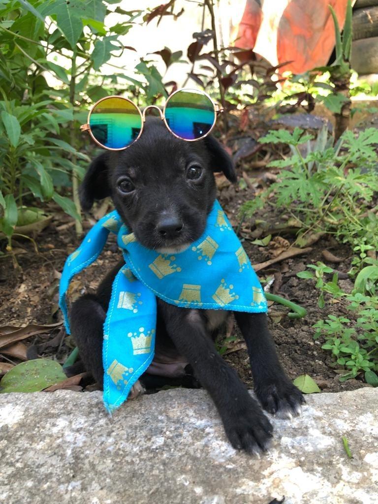 Imagem de um filho de cachorro de óculos escuros e com um lenço no pescoço