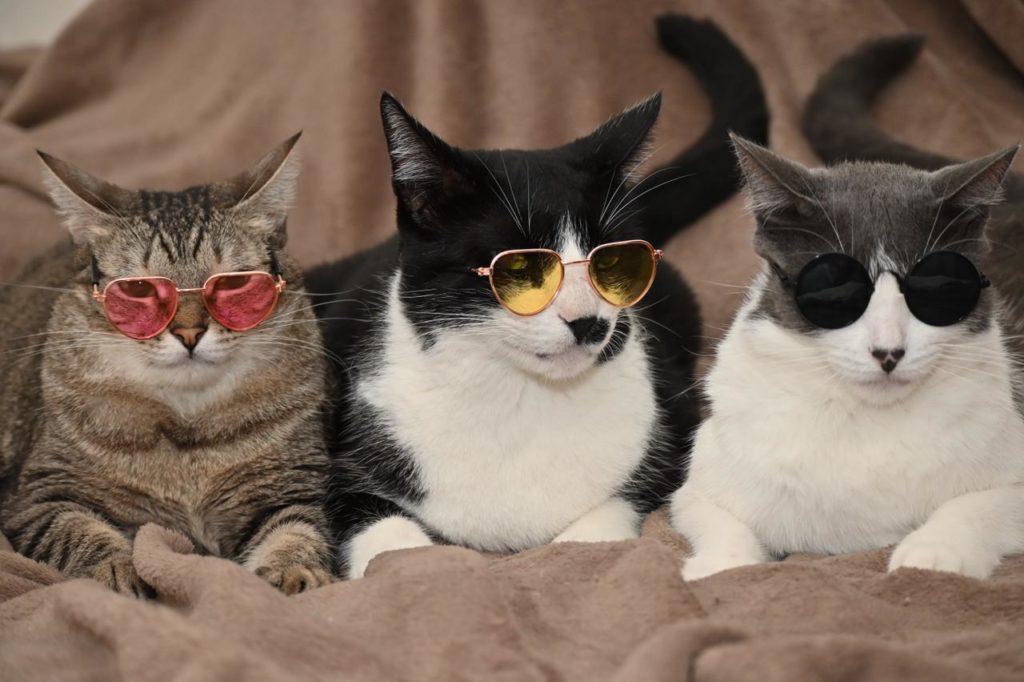 Imagens de três gatos com óculos coloridos