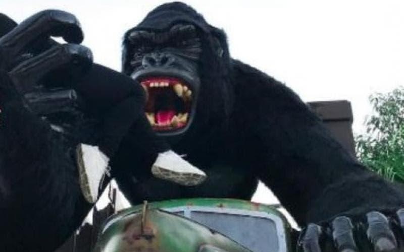 gorila do Beto Carrero World