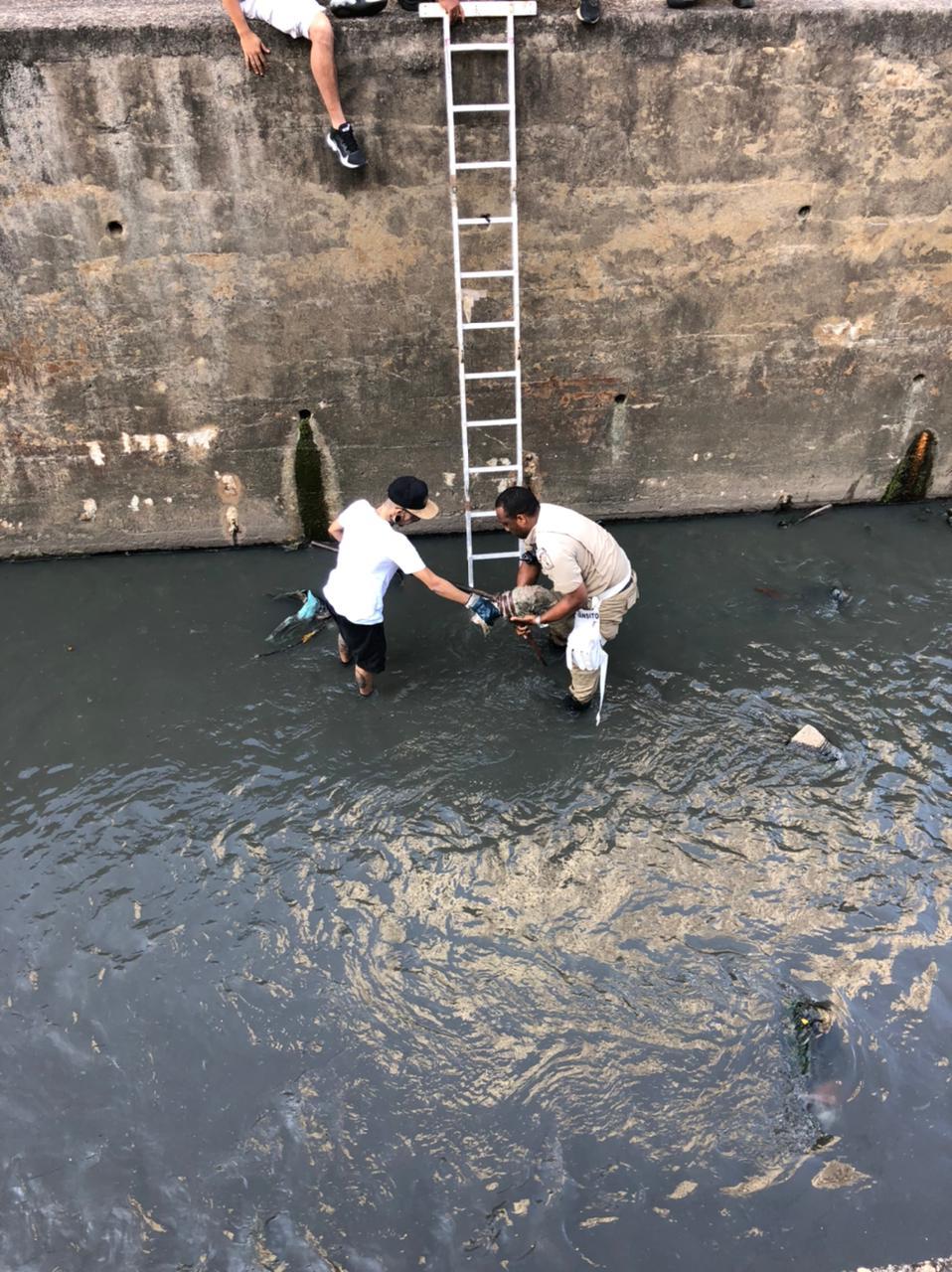 Imagem do resgate da cachorra no rio Joana