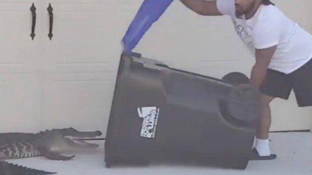 Morador usa lata de lixo para capturar jacaré que apareceu no jardim de casa